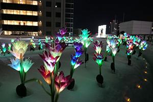 The flower garden night